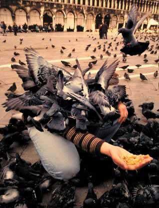 Отыщи любителя птиц