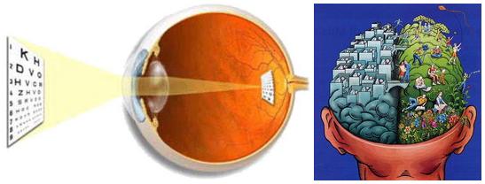Як око формує картинку