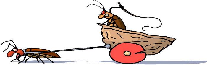 Картинки тараканы разбегаются